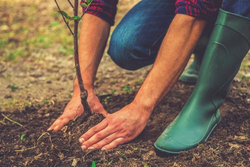 garden-health-outdoors-nature